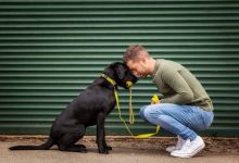 Photo of Effects Of Having A Pet In Our Mental Health – Barking Heads
