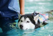 Photo of Tips On Safely Swimming With Your Pet