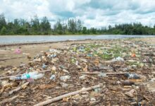 Photo of 4 Ways How Improper Waste Disposal Affects the Environment