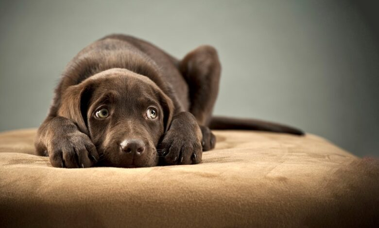 Photo of 5 Ways to Prevent and Treat Anxiety Among Dogs