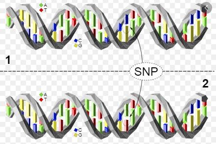 Photo of Genealogical DNA Testing